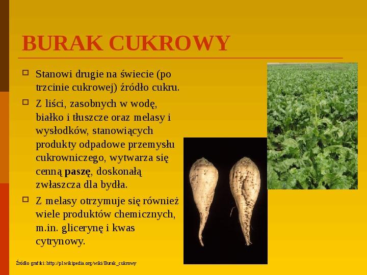 Co uprawiają i hodują ludzie w Polsce? - Slajd 29