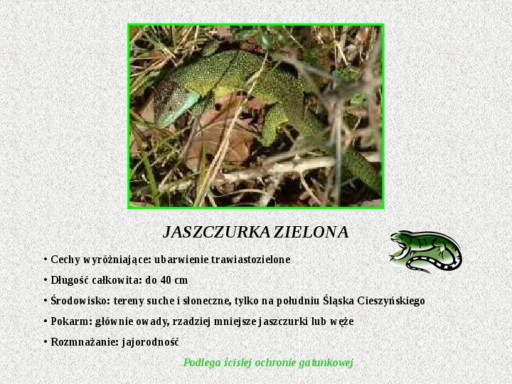Gady Polski - Slajd 4