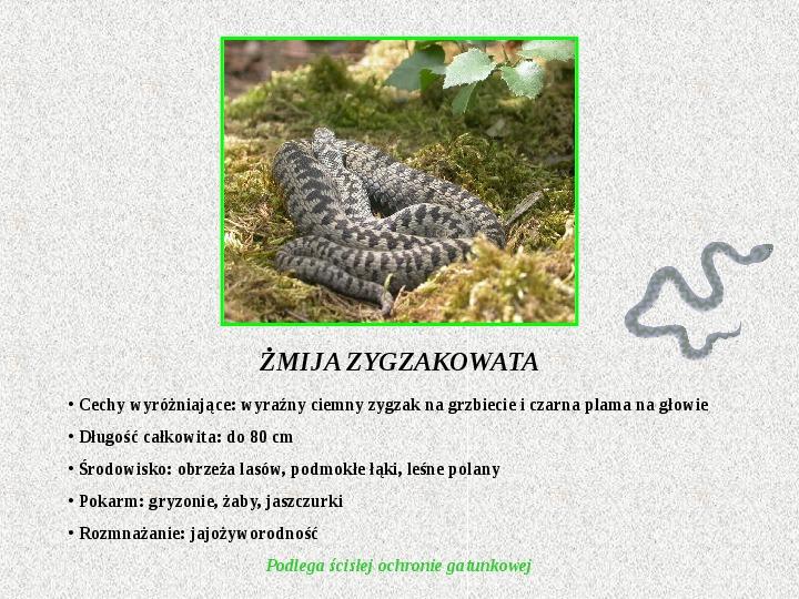 Gady Polski - Slajd 9