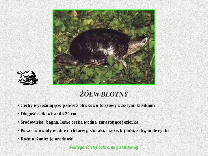 Gady Polski - Slajd 10