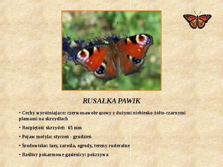 Motyle Polski - Slajd 2