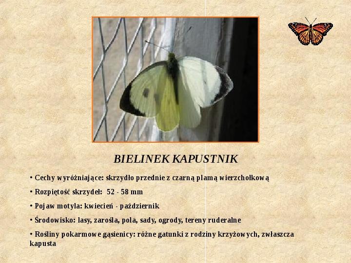 Motyle Polski - Slajd 3