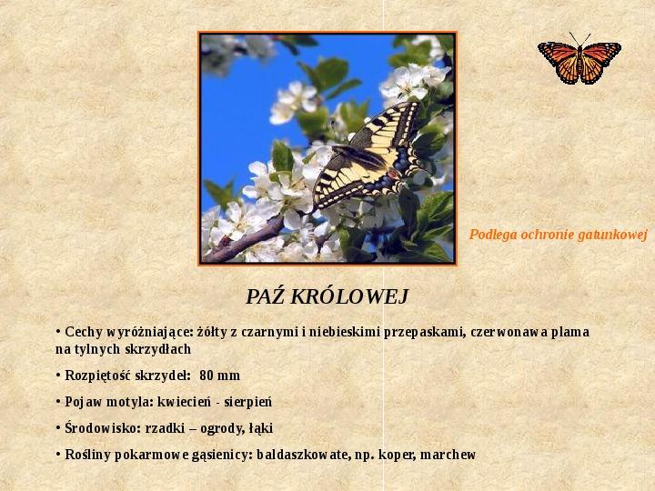Motyle Polski - Slajd 4