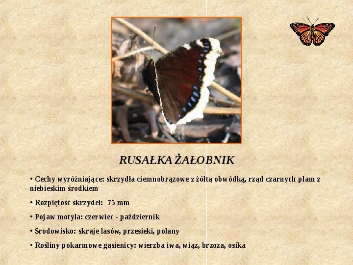 Motyle Polski - Slajd 6