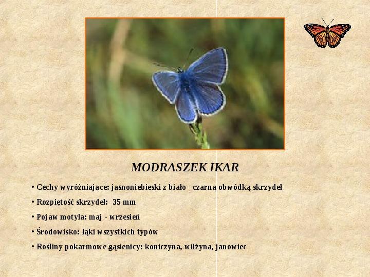 Motyle Polski - Slajd 7