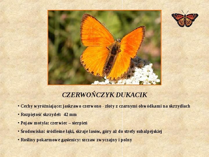 Motyle Polski - Slajd 8