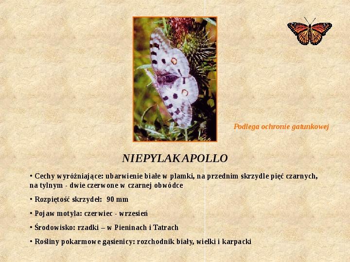 Motyle Polski - Slajd 9
