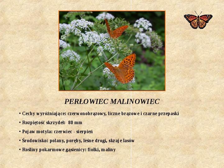 Motyle Polski - Slajd 10
