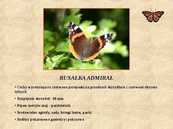 Motyle Polski - Slajd 11