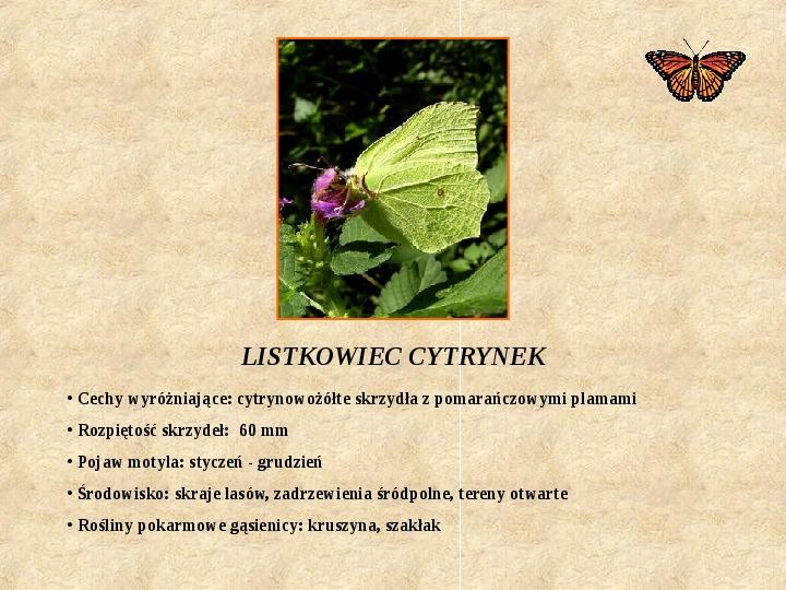 Motyle Polski - Slajd 12