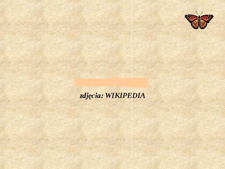 Motyle Polski - Slajd 14