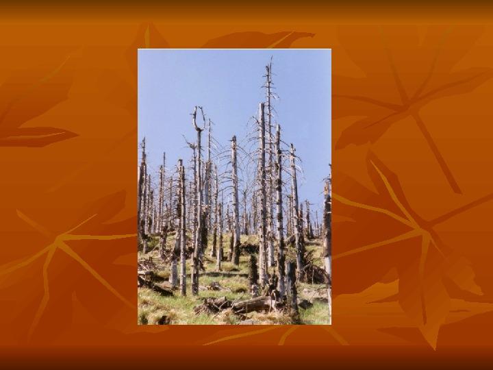 Ekologia - Slajd 7