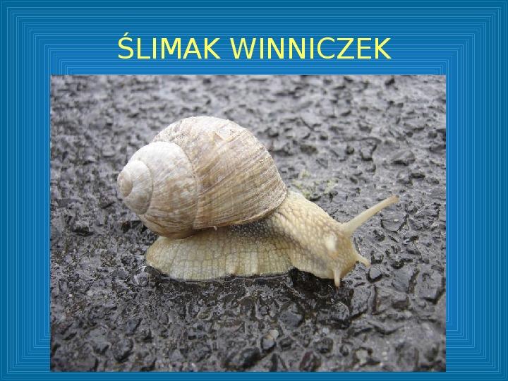 Poznajmy mięczaki - Świat ślimaków - Slajd 5