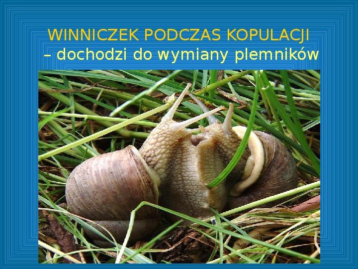 Poznajmy mięczaki - Świat ślimaków - Slajd 8