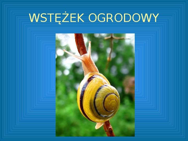 Poznajmy mięczaki - Świat ślimaków - Slajd 14