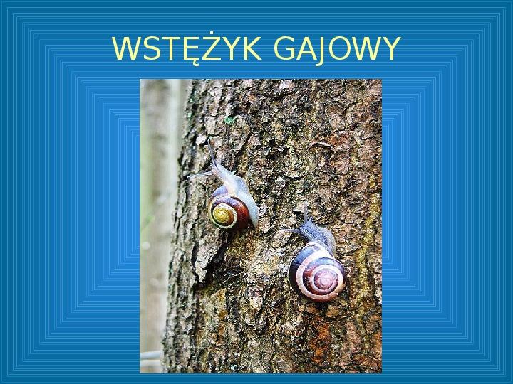 Poznajmy mięczaki - Świat ślimaków - Slajd 18