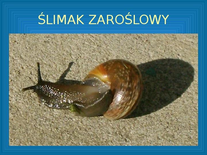 Poznajmy mięczaki - Świat ślimaków - Slajd 21