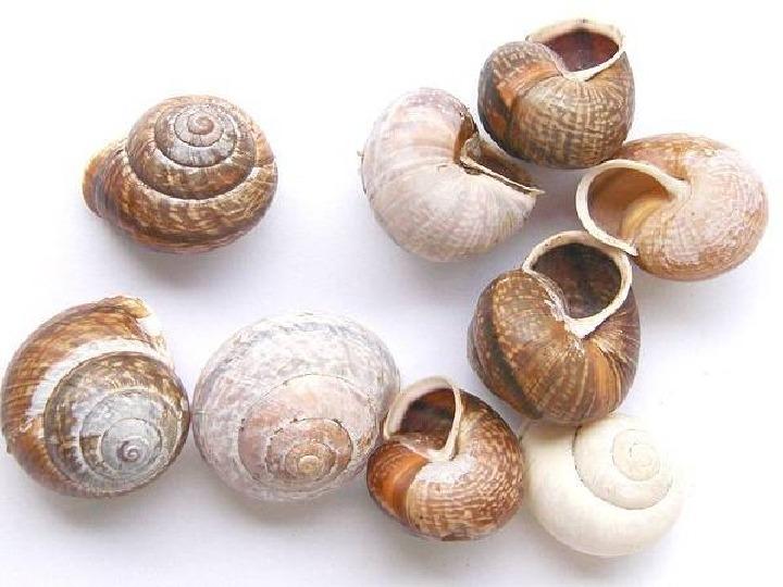 Poznajmy mięczaki - Świat ślimaków - Slajd 22
