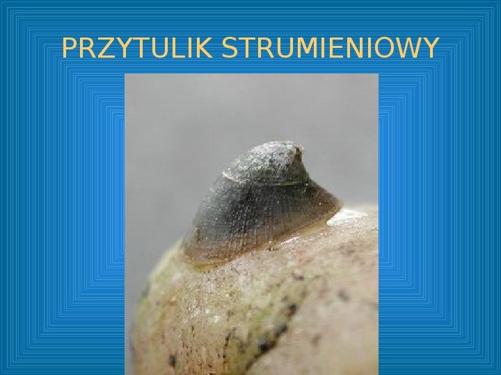 Poznajmy mięczaki - Świat ślimaków - Slajd 42