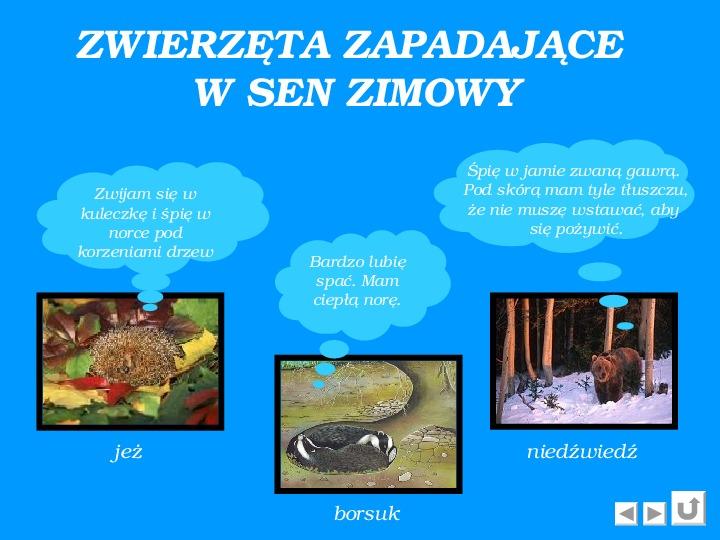 Zima - Slajd 6