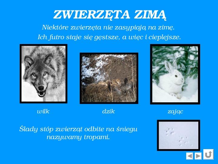 Zima - Slajd 7