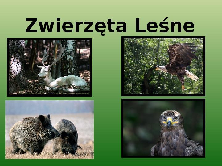 Zwierzęta leśne - Slajd 1