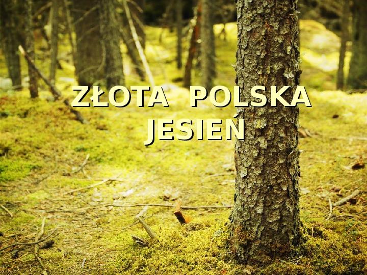 Złota polska jesień - Slajd 1