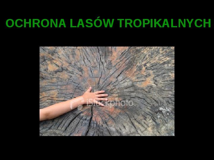 Ochrona lasów tropikalnych - Slajd 1