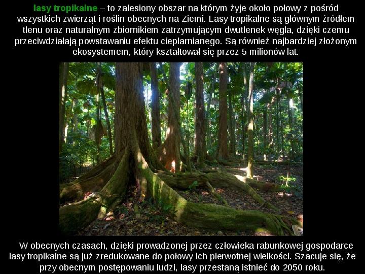 Ochrona lasów tropikalnych - Slajd 2