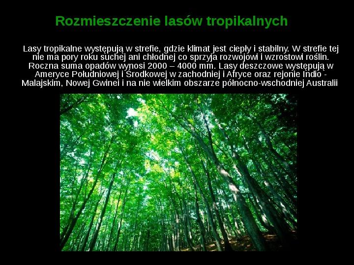 Ochrona lasów tropikalnych - Slajd 3