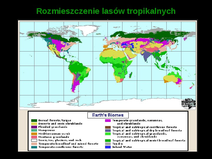 Ochrona lasów tropikalnych - Slajd 4