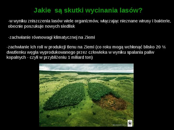 Ochrona lasów tropikalnych - Slajd 6