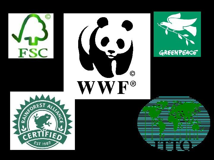 Ochrona lasów tropikalnych - Slajd 13