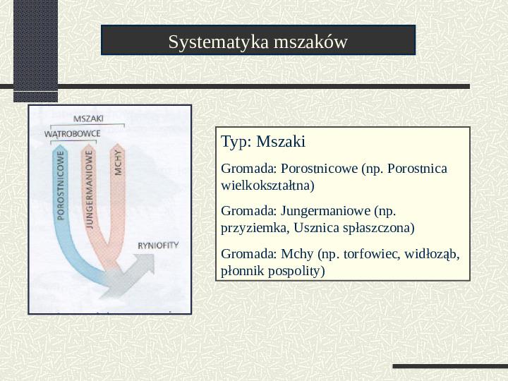 Budowa i cykl rozwojowy mszaków - Slajd 2