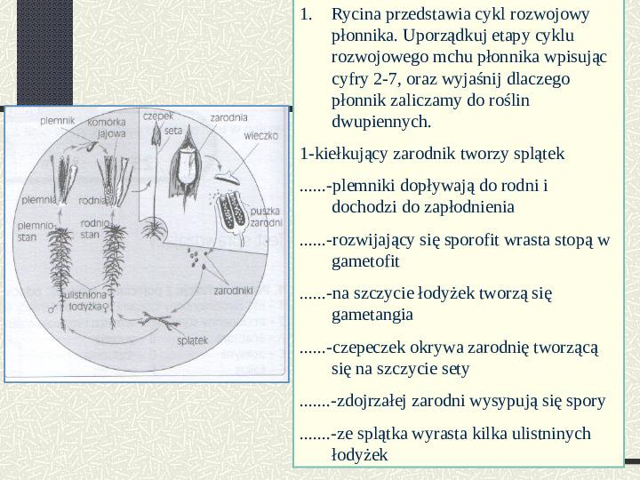 Budowa i cykl rozwojowy mszaków - Slajd 9
