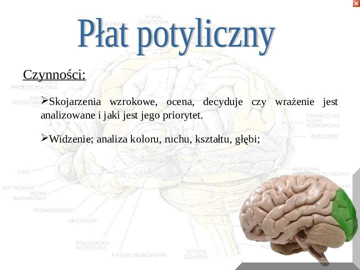 Mózg - Slajd 11