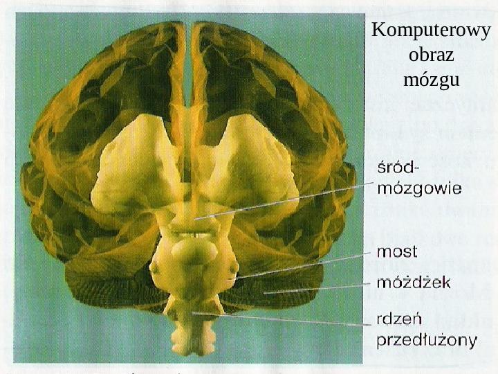 Mózg - Slajd 23