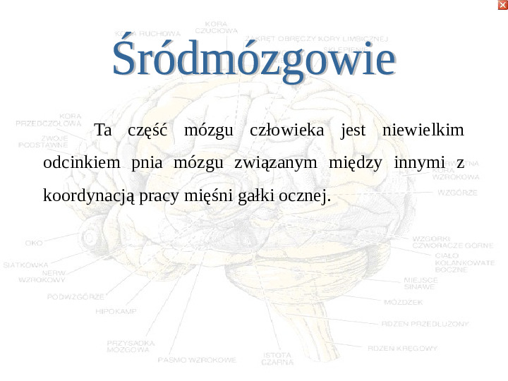 Mózg - Slajd 25