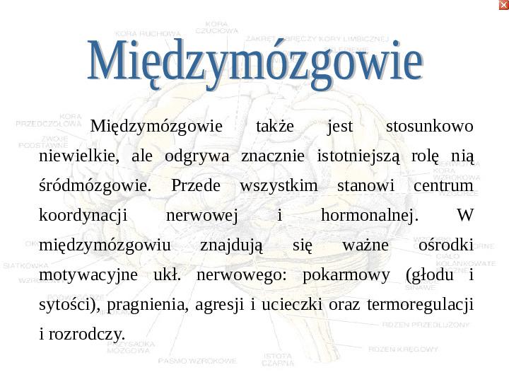 Mózg - Slajd 26