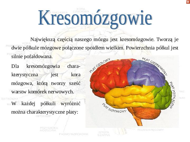Mózg - Slajd 27