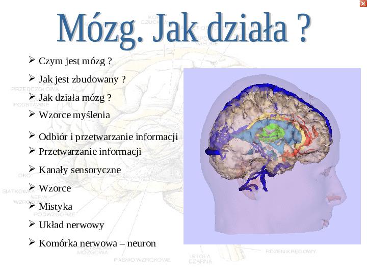 Mózg - Slajd 30