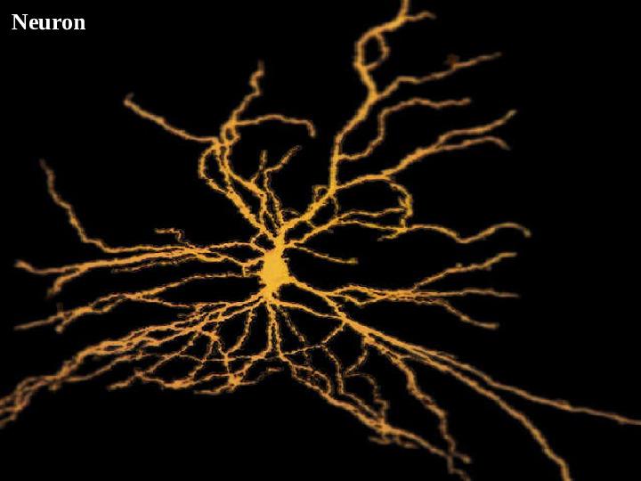 Mózg - Slajd 42