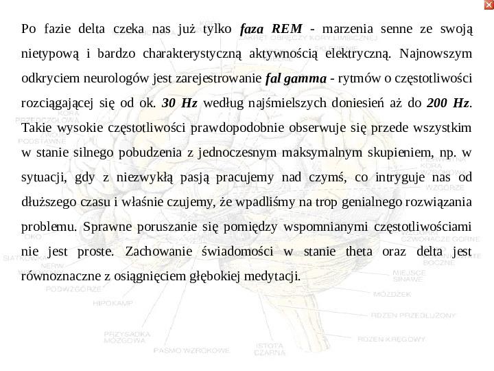 Mózg - Slajd 64