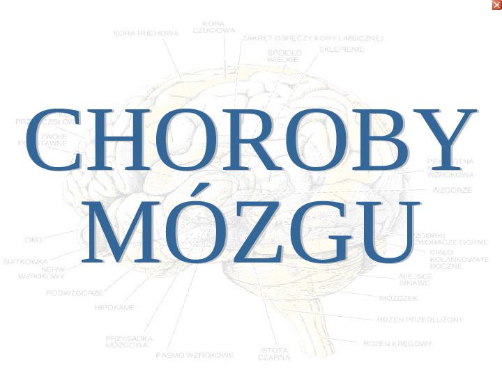 Mózg - Slajd 74