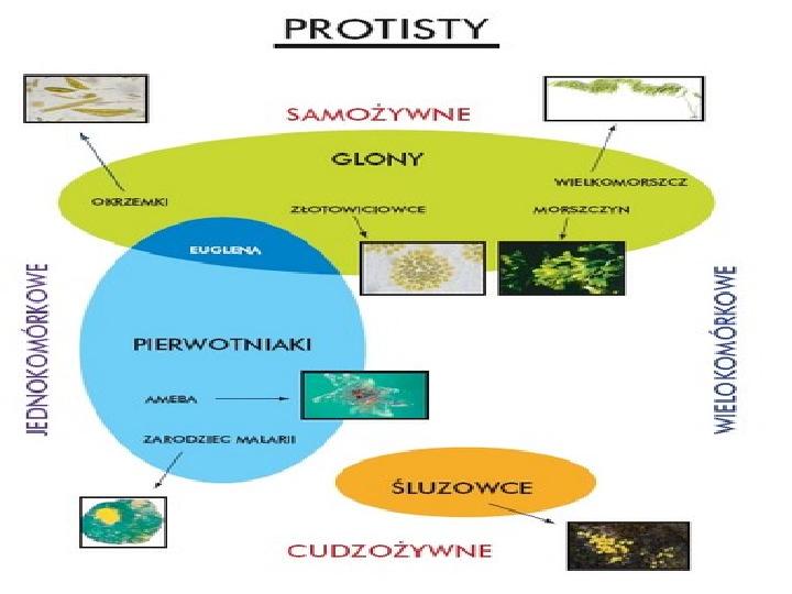 Organizmy jednokomórkowe są różnorodne - Slajd 3