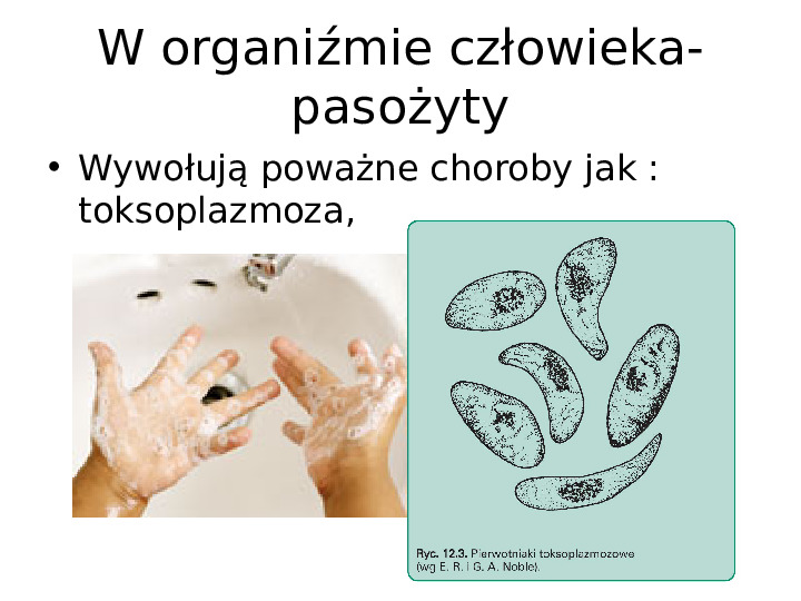 Organizmy jednokomórkowe są różnorodne - Slajd 10