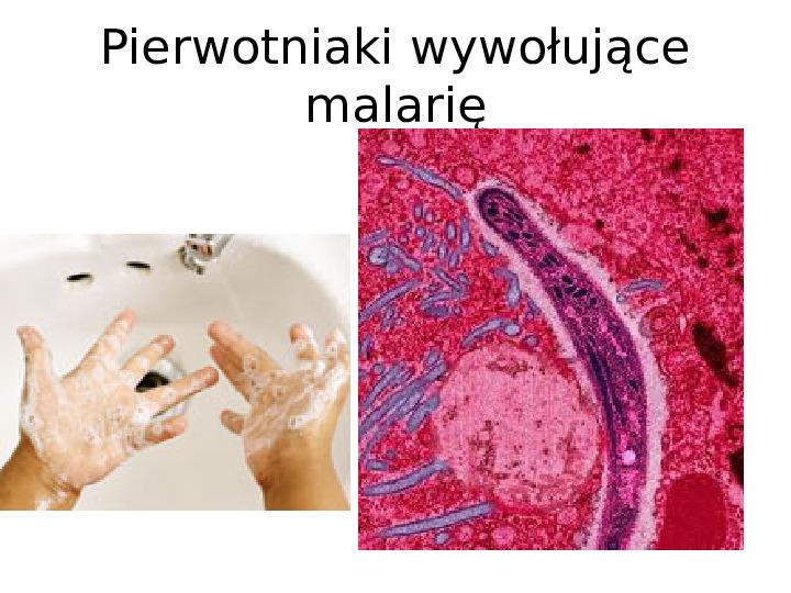 Organizmy jednokomórkowe są różnorodne - Slajd 11