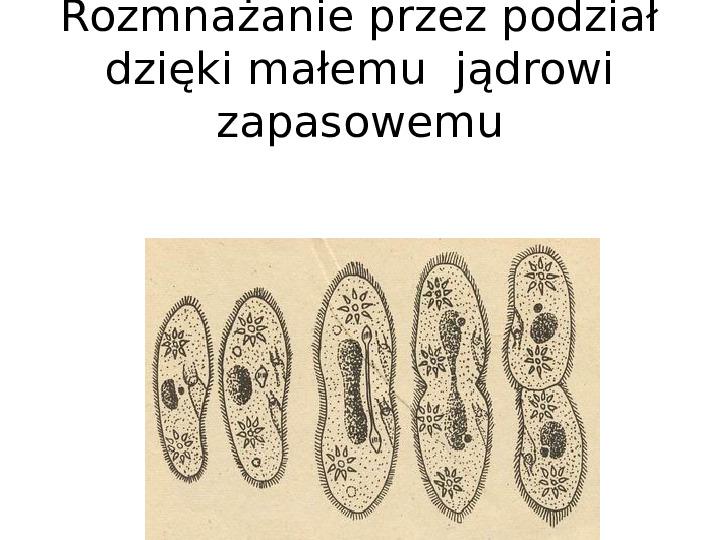 Organizmy jednokomórkowe są różnorodne - Slajd 20