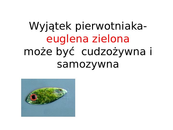 Organizmy jednokomórkowe są różnorodne - Slajd 22