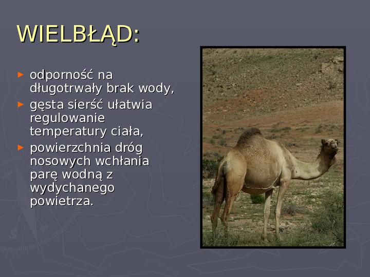 Państwa zwierzęce - palearktyka i nearktyka - Slajd 23